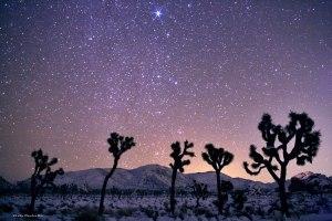 """Imágenes como esta, del desierto """"Joshua Tree"""" inspiraron a Kahn para las canciones de su disco """"Two suns"""""""
